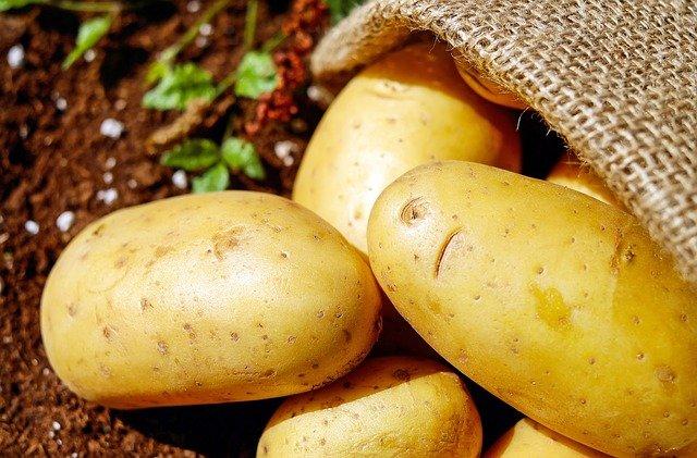 sklizené brambory