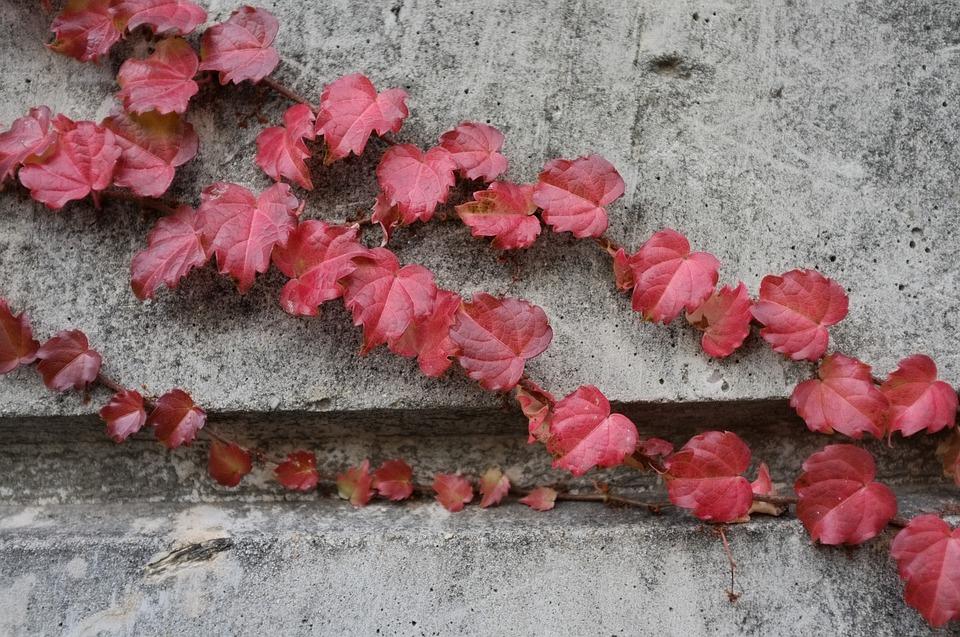 podzimní atmosféra na plotě z betonu