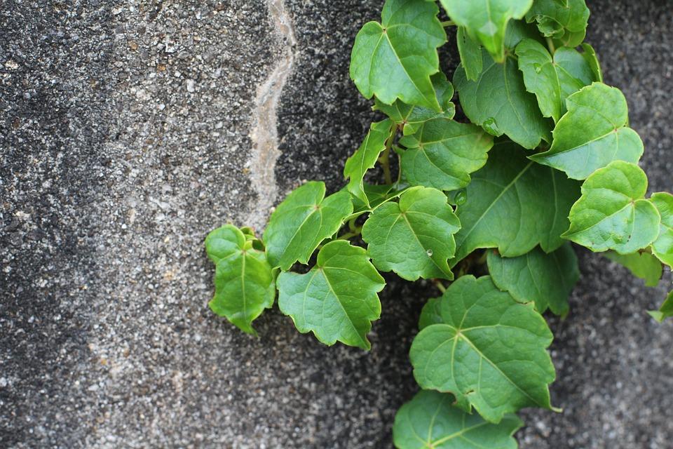 rostlina na zdi